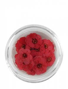 Nail Art Dried Flowers - Red
